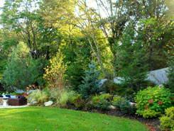 Bushes | Lawn Care in Avon, MA